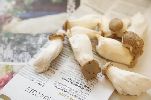 elingi-mushroom-diet5