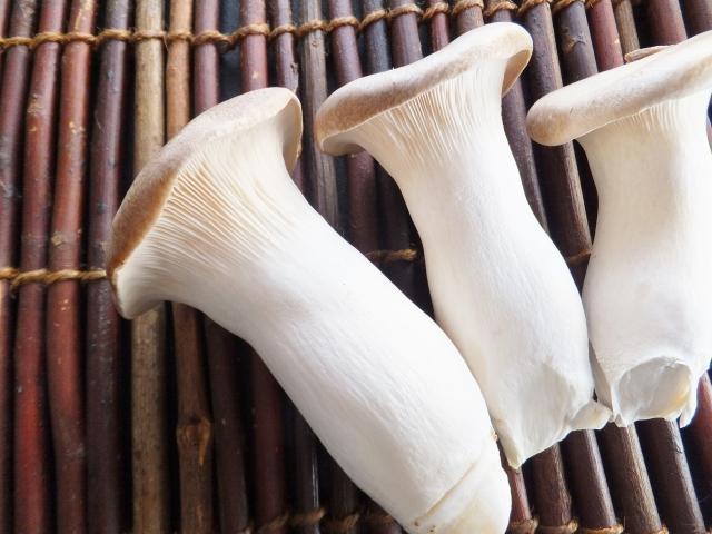 elingi-mushroom-diet8