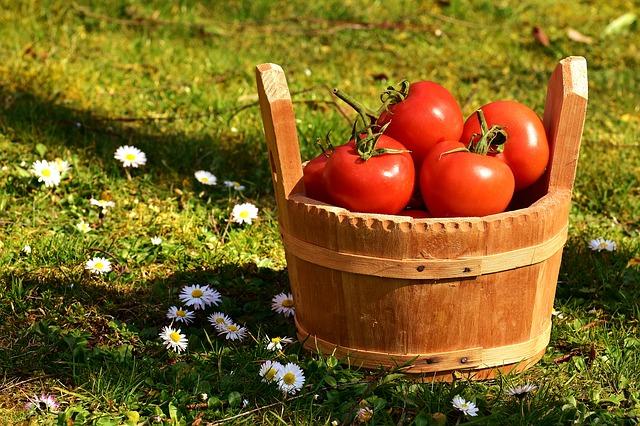 tomato-juice-diet10