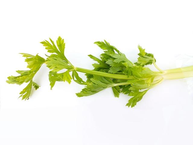 celery-diet2