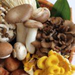 きのこダイエットの5つのレシピや種類・痩せた口コミをご紹介!