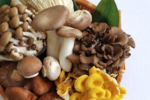 mushroom-diet1