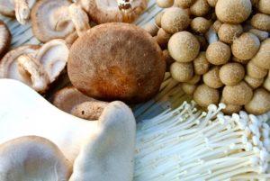 mushroom-diet3